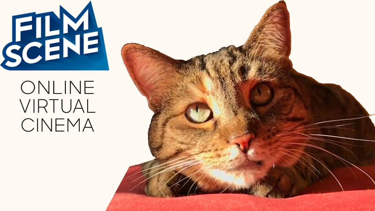Quarantine Cat Film Festival @ FilmScene