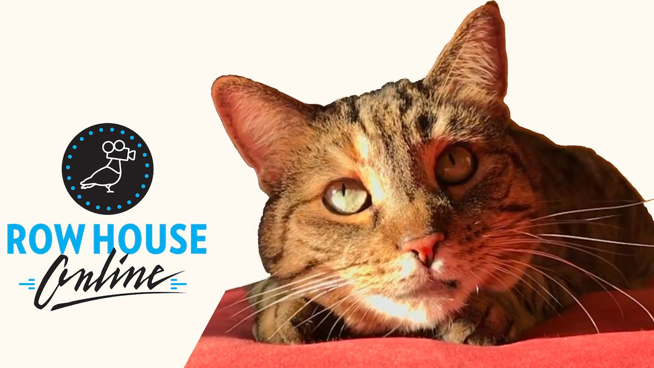 Quarantine Cat Film Festival @ Row House Cinema