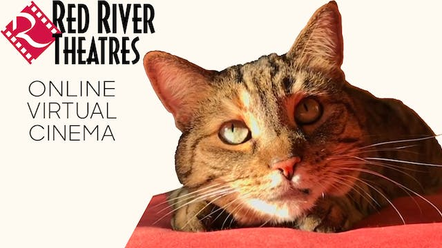 Quarantine Cat Film Festival @ Red River Theatres
