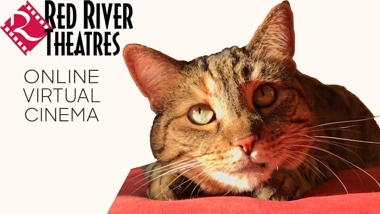 Quarantine Cat Film Festival @ Red River Theatres