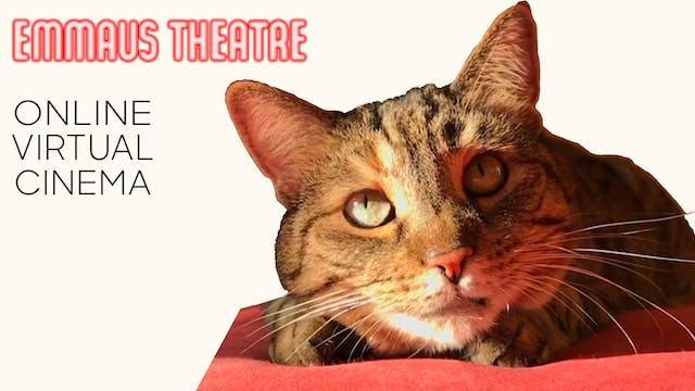 Quarantine Cat Film Festival @ Emmaus Theatre