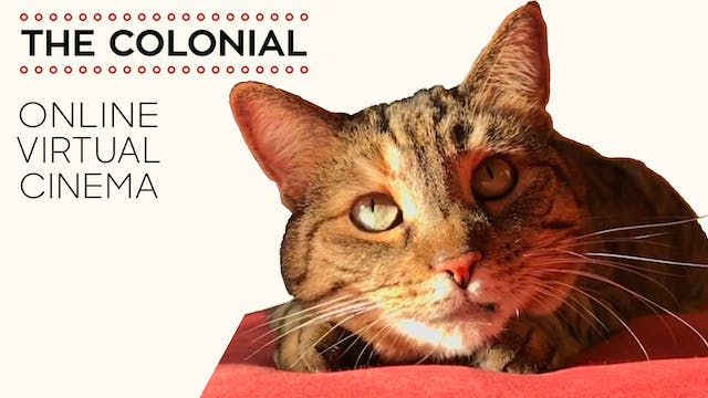 Quarantine Cat Film Festival @ Colonial Theatre