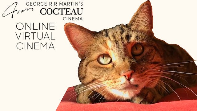 Quarantine Cat Film Festival @ Jean Cocteau Cinema