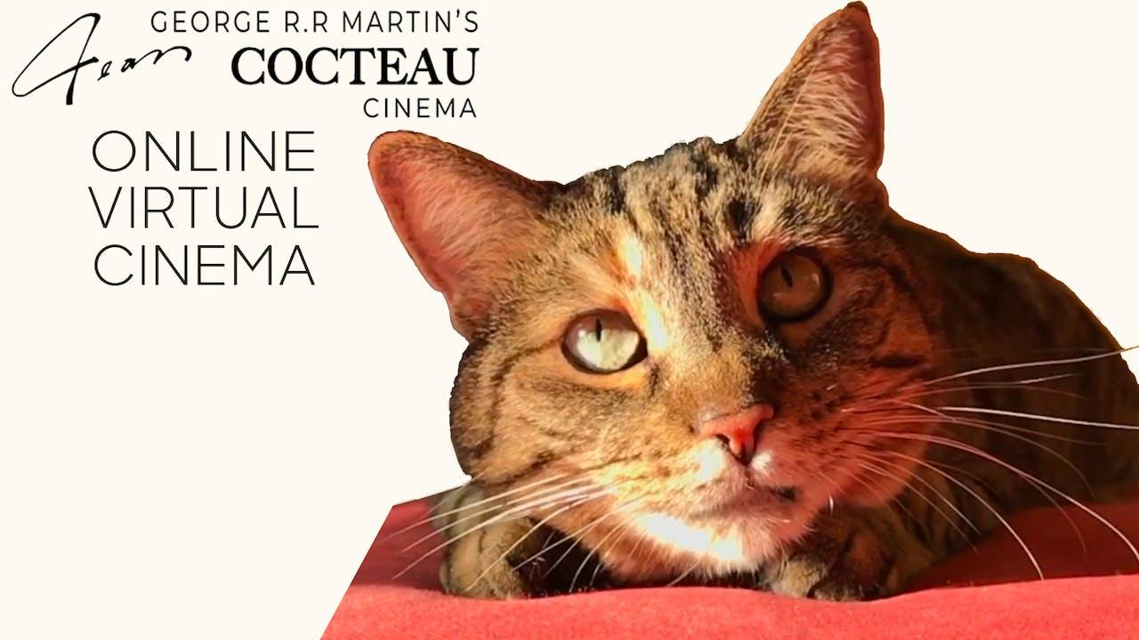 Quarantine Cat Film Festival @ Jean Cocteau Cinema