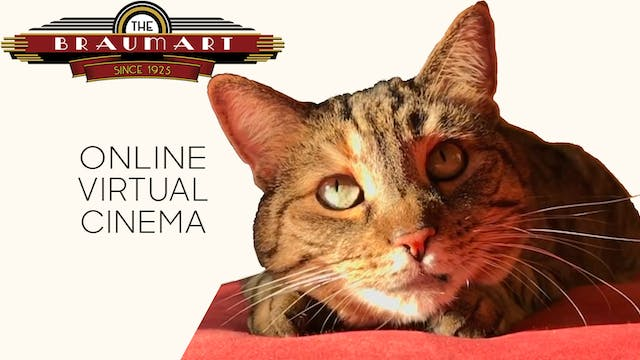 Quarantine Cat Film Festival @ The Braumart