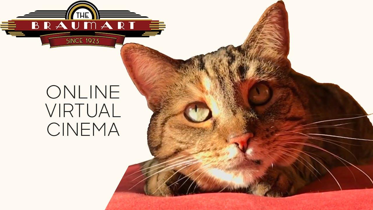 Quarantine Cat Film Festival @ The Braumart