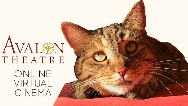 Quarantine Cat Film Festival @ Avalon Theatre