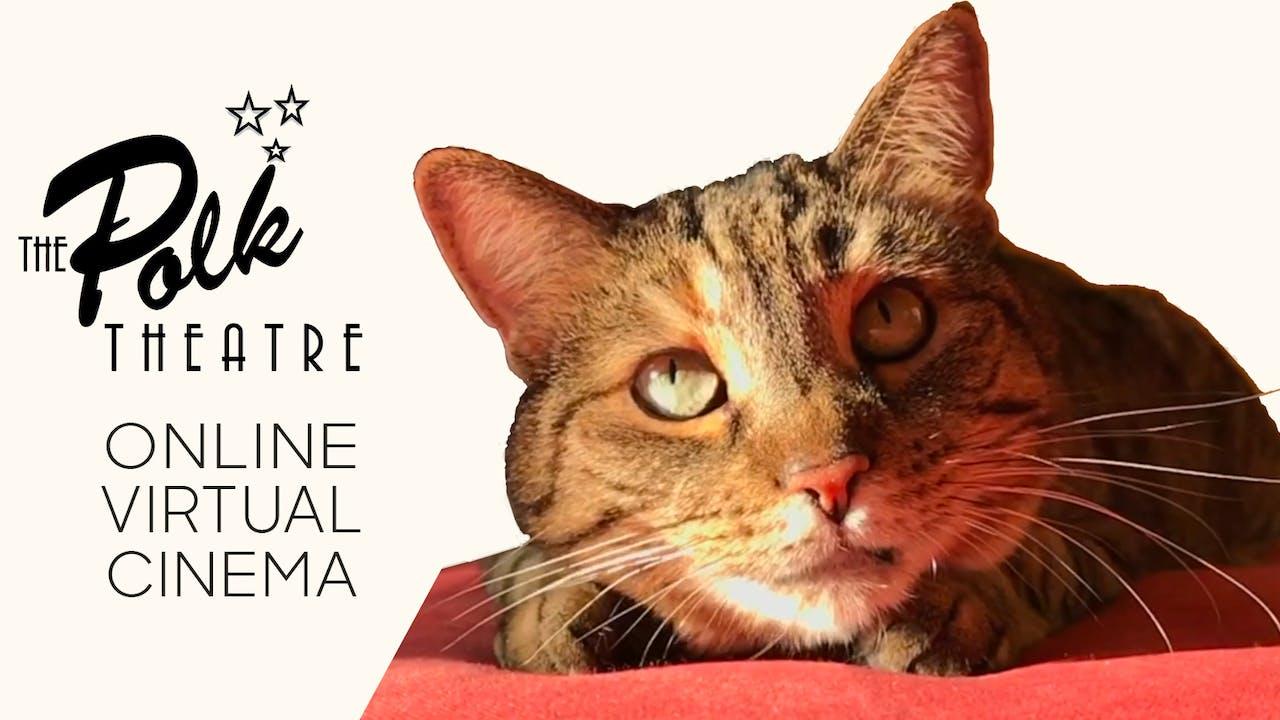 Quarantine Cat Film Festival @ The Polk Theatre