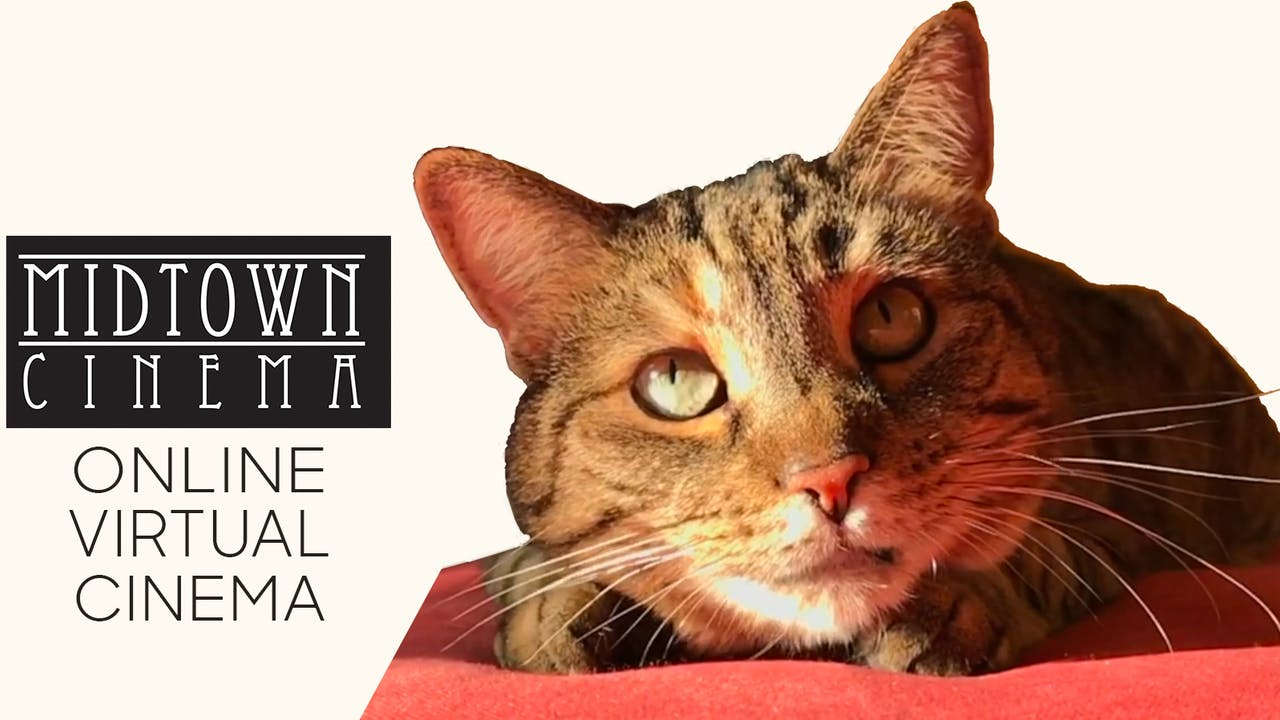 Quarantine Cat Film Festival @ Midtown Cinema