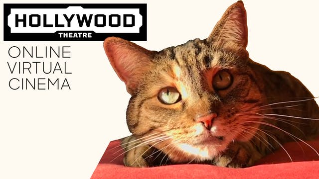 Quarantine Cat Film Fest @ The Hollywood Theatre