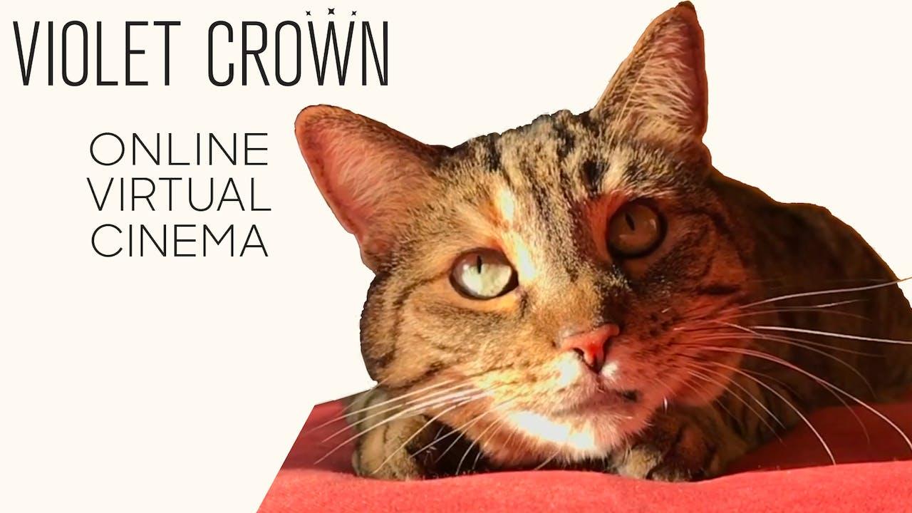 Quarantine Cat Film Fest @ Violet Crown - Austin