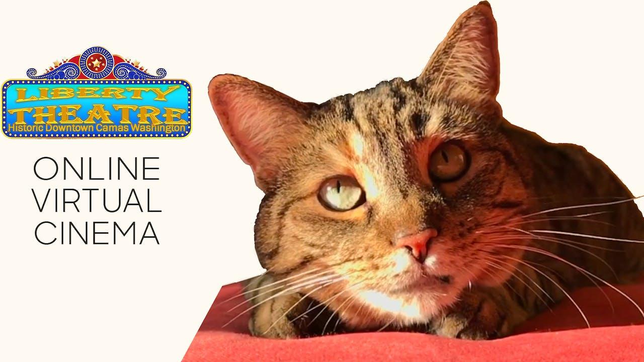 Quarantine Cat Film Festival @ Liberty Theatre