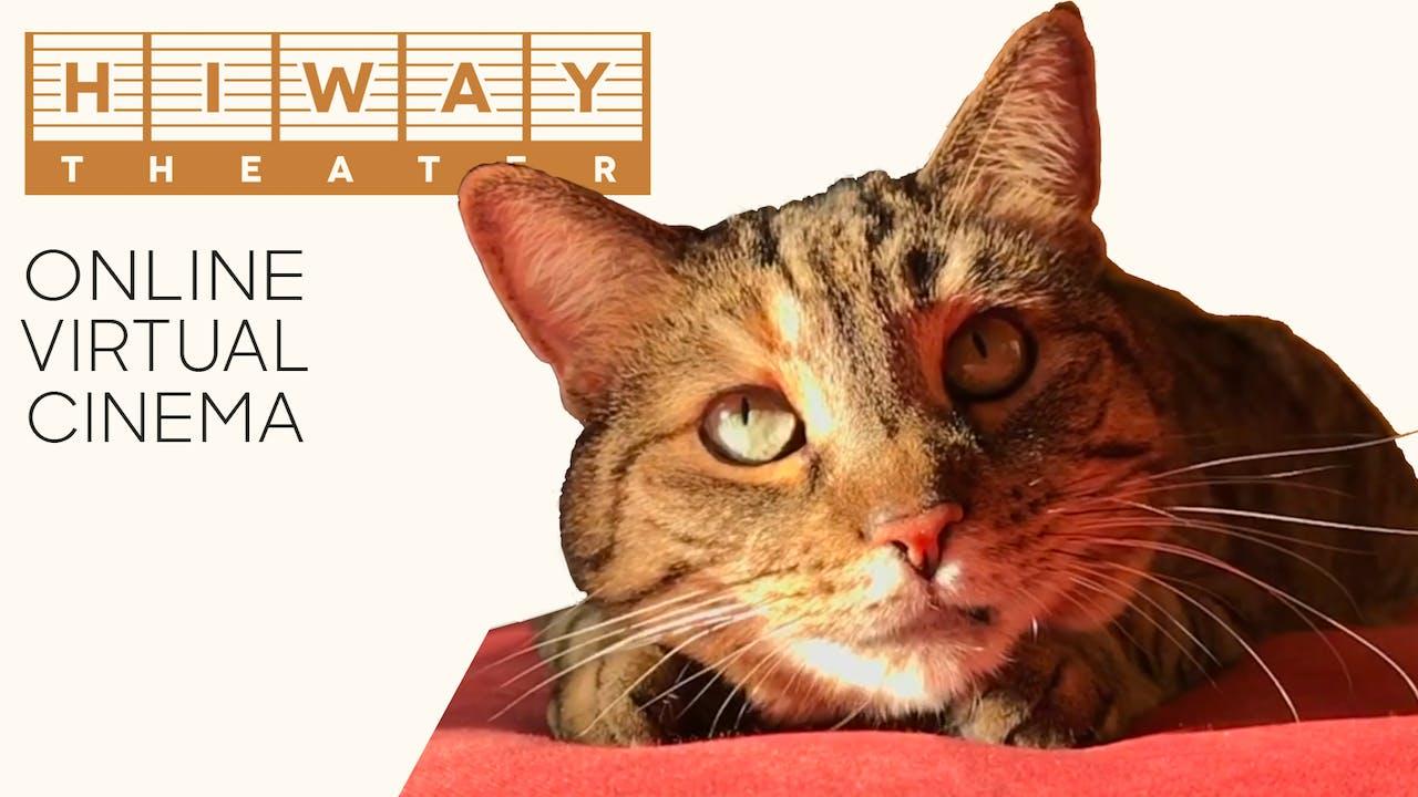 Quarantine Cat Film Festival @ Hiway Theater