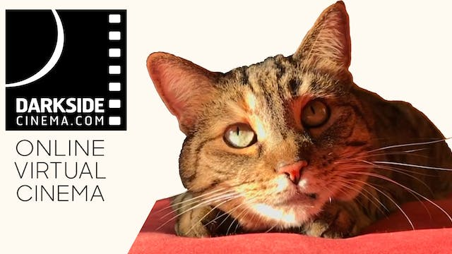 Quarantine Cat Film Festival @ Darkside Cinema