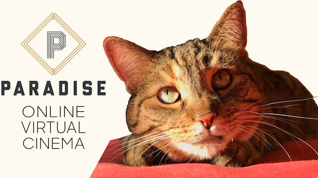 Quarantine Cat Film Festival @ Paradise Theater