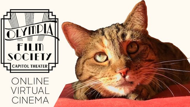 Quarantine Cat Film Fest @ Olympia Film Society