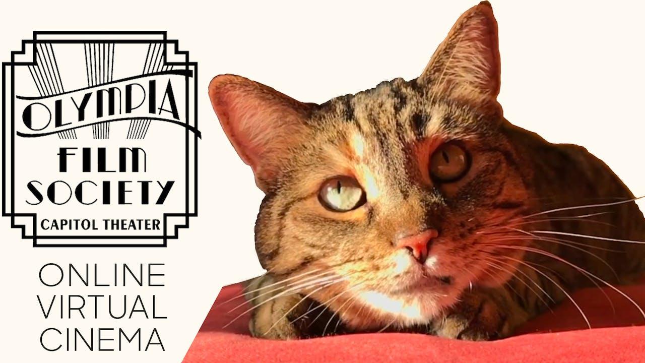 Quarantine Cat Film Fest @ Olympia Film Society