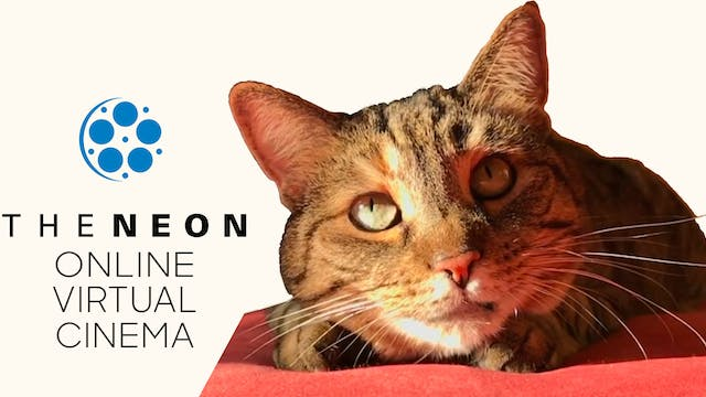 Quarantine Cat Film Festival @ The Neon