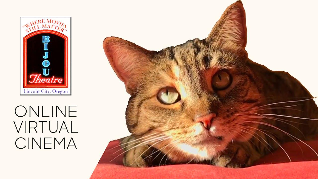 Quarantine Cat Film Festival @ The Bijou Theater