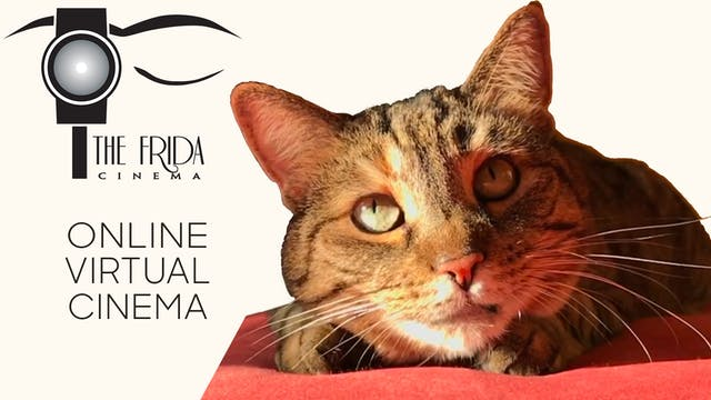 Quarantine Cat Film Festival @ The Frida Cinema