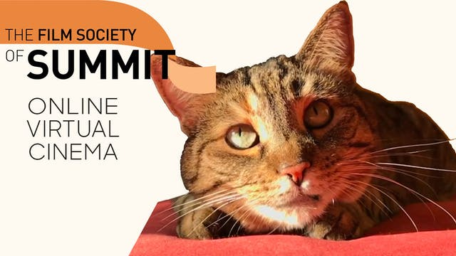 Quarantine Cat Film Fest @ Film Society of Summit