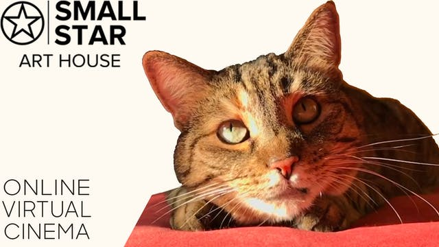 Quarantine Cat Film Fest @ Small Star Art House
