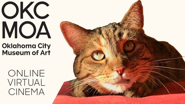 Quarantine Cat Film Festival @ OKC Museum of Art