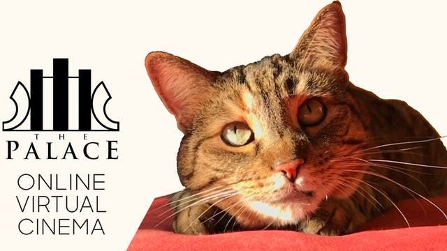 Quarantine Cat Film Fest @ Kennett Palace Theater
