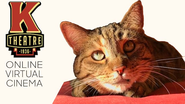 Quarantine Cat Film Festival @ Kiggins Theatre