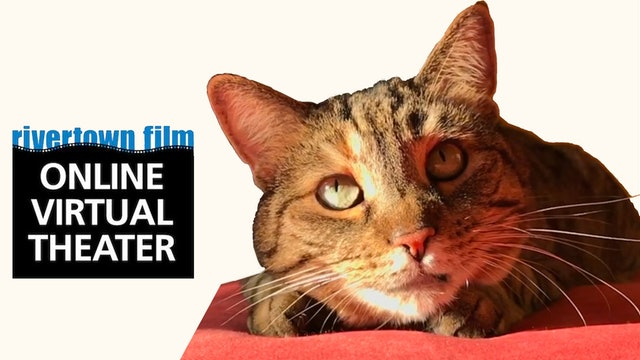 Quarantine Cat Film Fest @ Rivertown Film Society