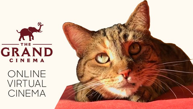 Quarantine Cat Film Festival @ The Grand Cinema