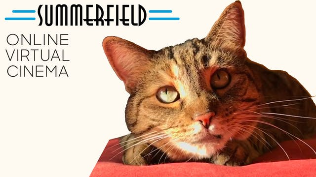 Quarantine Cat Film Festival @ Summerfield Cinemas