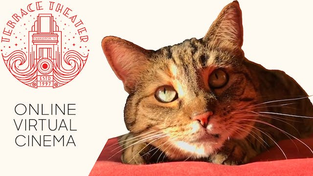 Quarantine Cat Film Festival @ Terrace Theater
