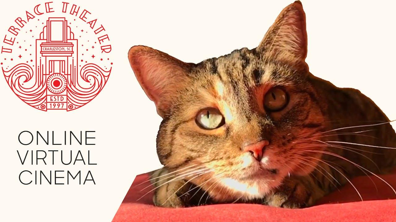Quarantine Cat Film Festival @ Terrace Theater