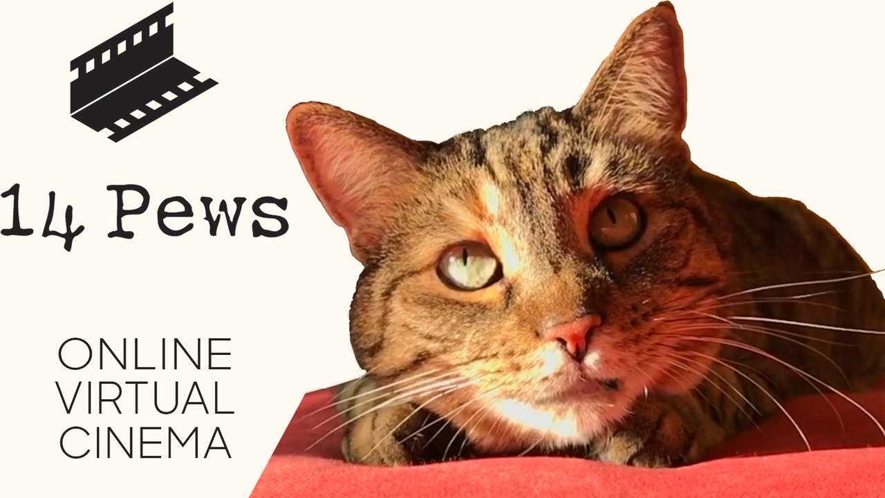 Quarantine Cat Film Festival @ 14 Pews