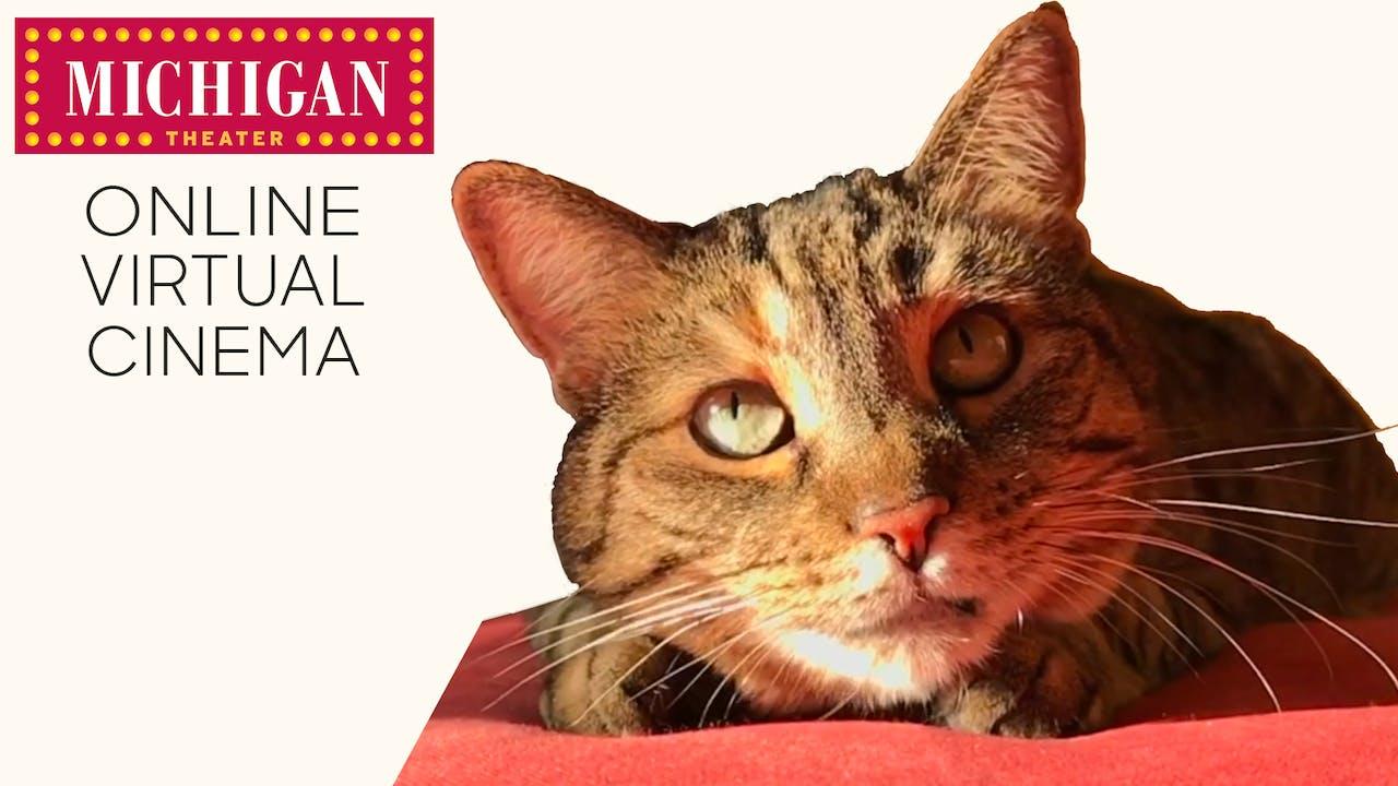 Quarantine Cat Film Festival @ Michigan Theater