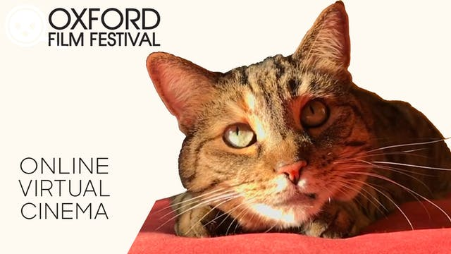 Quarantine Cat Film Fest @ Oxford Film Festival