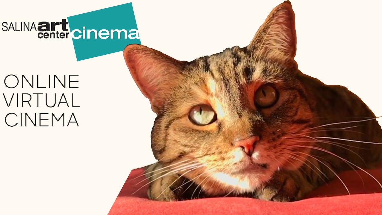 Quarantine Cat Film Festival @ Salina Art Center