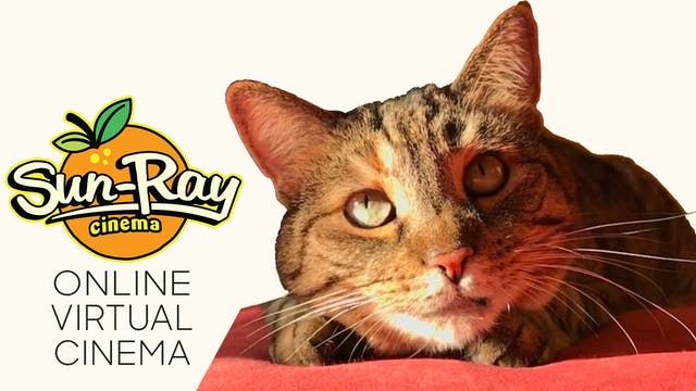 Quarantine Cat Film Festival @ Sun-Ray Cinema