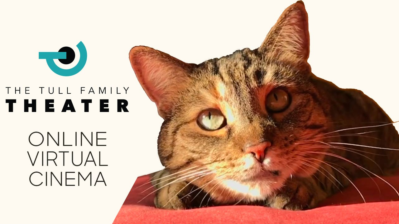Quarantine Cat Film Festival @ Tull Family Theater