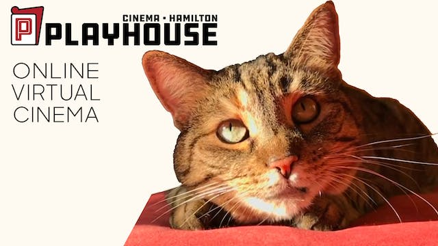 Quarantine Cat Film Festival @ Playhouse Cinema