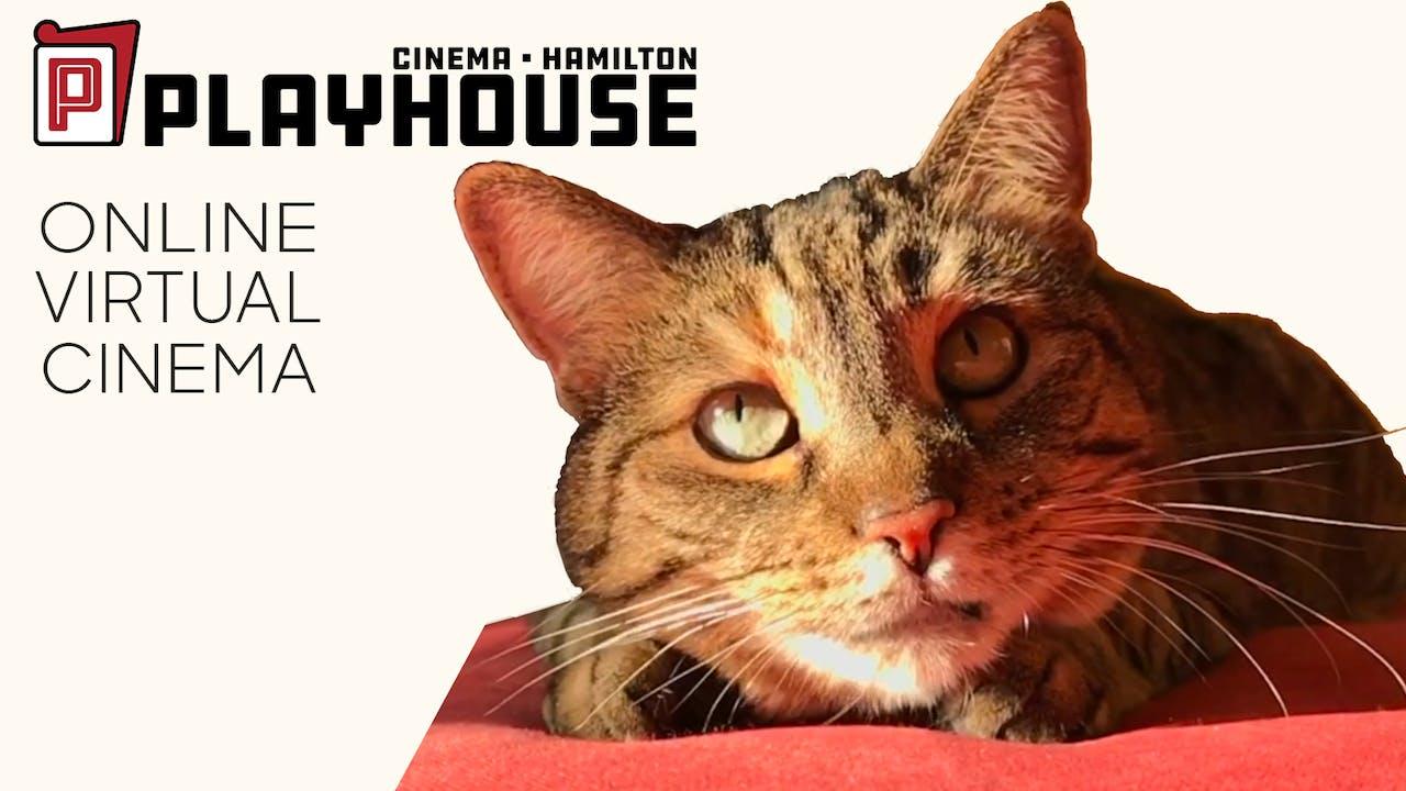 Quarantine Cat Film Festival @ Playhouse Cinema
