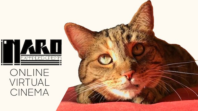 Quarantine Cat Film Fest @ Naro Expanded Cinema