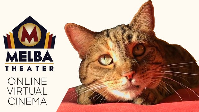Quarantine Cat Film Festival @ Melba Theater