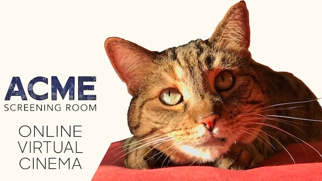 Quarantine Cat Film Festival @ Acme Screening Room