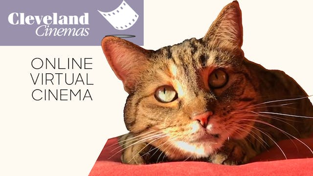 Quarantine Cat Film Festival @ Cleveland Cinemas