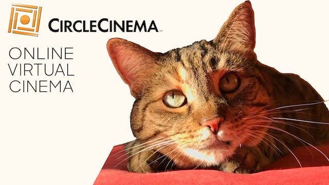 Quarantine Cat Film Festival @ Circle Cinema