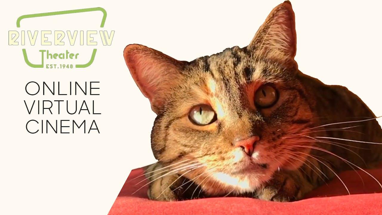 Quarantine Cat Film Festival @ Riverview Theater