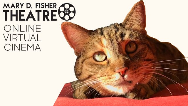 Quarantine Cat Film Fest @ Mary D. Fisher Theatre