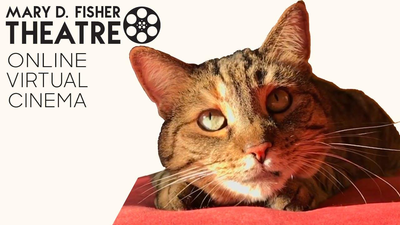 Quarantine Cat Film Fest @ Mary D. Fisher Theatre
